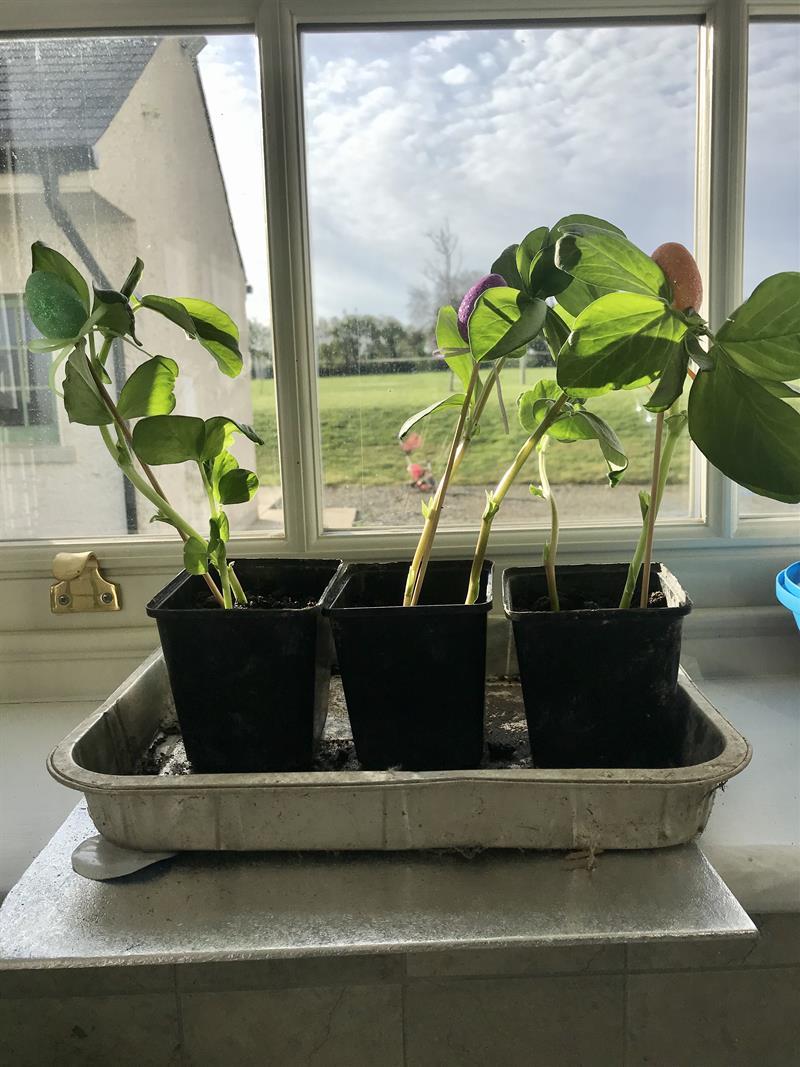 Seed planted.jpeg