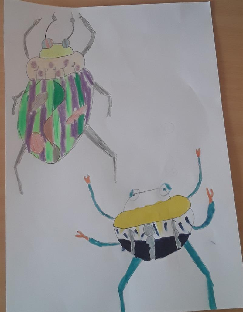 DF insect art.jpg