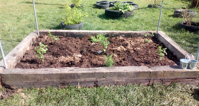 AS gardening.JPG