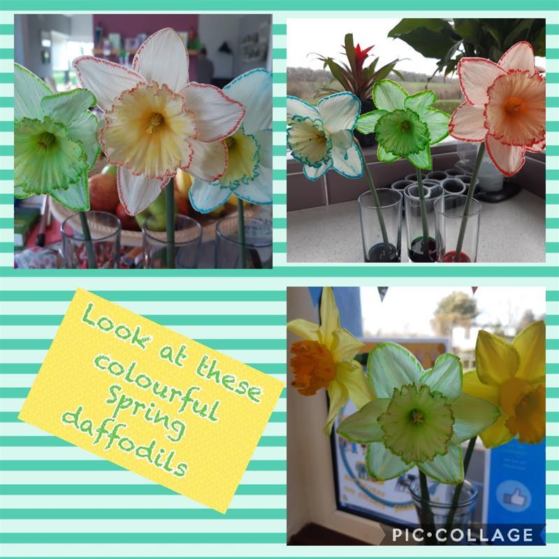Creating new daffodils.jpg
